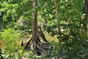 Chickasawhay River Hunting Lodge and Timber Investment  in Clarke, MS (22 of 47)