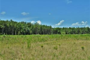 Chickasawhay River Hunting Lodge and Timber Investment  in Clarke, MS (15 of 47)