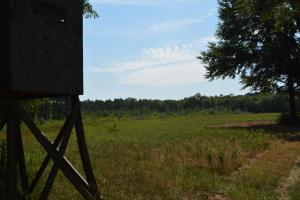 Chickasawhay River Hunting Lodge and Timber Investment  in Clarke, MS (10 of 47)
