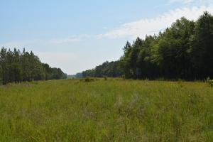 Chickasawhay River Hunting Lodge and Timber Investment  in Clarke, MS (11 of 47)