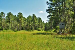 Chickasawhay River Hunting Lodge and Timber Investment  in Clarke, MS (23 of 47)