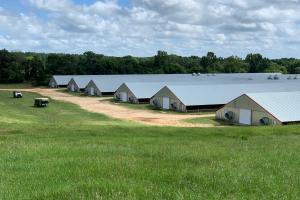 Chicken/Cattle Farm Jasper County MS - Jasper County MS
