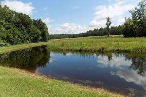 Grant Tract Hunting Preserve - Bamberg County SC