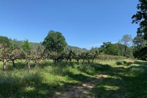 Vineyard Land in Lower Lake - Lake County CA