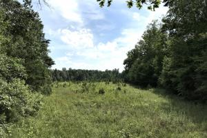 8 acre field with 2 year growth. Excellent deer habitat (14 of 34)