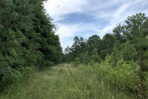 Rural Acreage with Timber and Field in Rowan, NC (33 of 34)