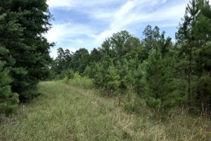 Rural Acreage with Timber and Field in Rowan, NC (32 of 34)