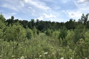 8 acre field with 2 year growth. Excellent deer habitat (31 of 34)
