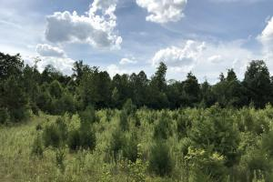 8 acre field with 2 year growth. Excellent deer habitat (30 of 34)