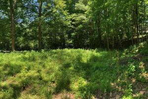 Prime Homesite Near Bolander Woods! - Marion County IN