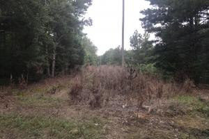 This narrow power line could be a site for a food plot.  (7 of 7)