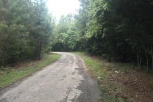 This is a view looking South on Joyce Road from the middle of the property. (6 of 7)