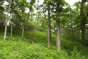 5 +/- Acres recreational property - Grant County WI