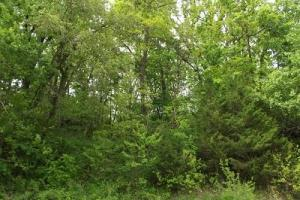 5 +/- Acres recreational property in Grant County, WI (5 of 5)