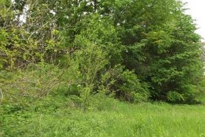 5 +/- Acres recreational property in Grant County, WI (4 of 5)