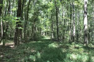Development Property and Timber in Rowan, NC (7 of 20)