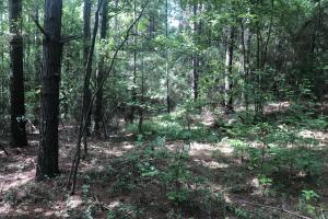 Sylvarena Timber Tract in Smith, MS (14 of 19)