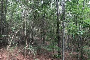 Sylvarena Timber Tract in Smith, MS (11 of 19)