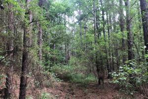 Sylvarena Timber Tract in Smith, MS (13 of 19)