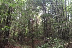 Sylvarena Timber Tract in Smith, MS (8 of 19)