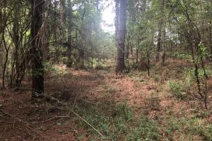 Sylvarena Timber Tract in Smith, MS (12 of 19)