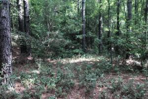 Sylvarena Timber Tract - Smith County MS