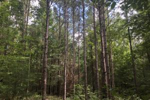 Sylvarena Timber Tract in Smith, MS (15 of 19)