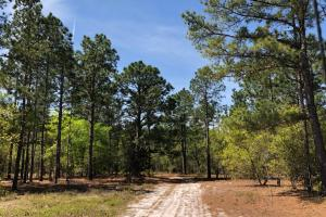 Opportunity Calls Roseboro Timber Tracts