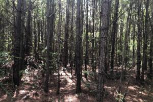 Taylorsville Timber Investment - Smith County MS