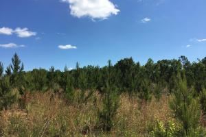 Union County Homesite and Hunting Land - Union County SC
