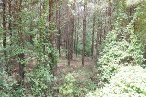 Taylor Creek Timber and Hunting -Tract A in Perry, AL (5 of 8)