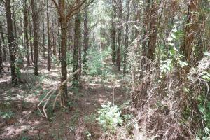 Taylor Creek Timber and Hunting -Tract A in Perry, AL (6 of 8)