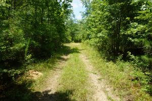 Taylor Creek Timber and Hunting -Tract A in Perry, AL (3 of 8)