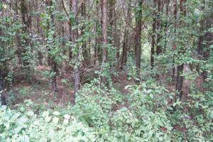 Taylor Creek Timber and Hunting -Tract A in Perry, AL (7 of 8)
