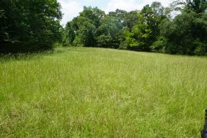 Hartley Road Timber, Hunting, & Pasture - Tract B - Perry County AL