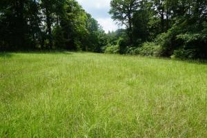 Hartley Road Timber, Hunting, & Pasture - Tract B in Perry, AL (3 of 7)