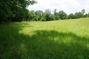 Hartley Road Timber, Hunting, & Pasture - Tract B in Perry, AL (6 of 7)