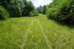 Hartley Road Timber, Hunting, & Pasture - Tract B in Perry, AL (4 of 7)