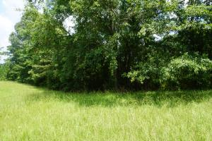 Hartley Road Timber, Hunting, & Pasture - Tract B in Perry, AL (2 of 7)