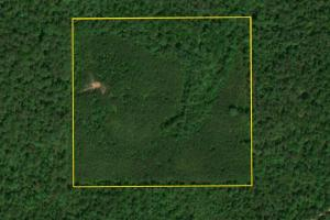 Hartley Road Timber & Hunting - Tract C - Perry County AL
