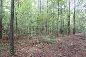 The Boligee Tombigbee River Timber & Hunting Investment in Greene, AL (7 of 49)