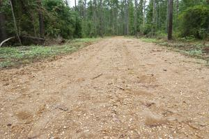 The Boligee Tombigbee River Timber & Hunting Investment in Greene, AL (14 of 49)