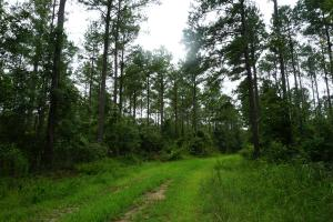 The Boligee Tombigbee River Timber & Hunting Investment in Greene, AL (23 of 49)