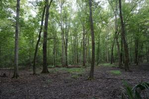 The Boligee Tombigbee River Timber & Hunting Investment in Greene, AL (37 of 49)