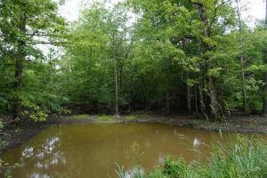 The Boligee Tombigbee River Timber & Hunting Investment in Greene, AL (20 of 49)