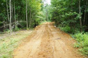 The Boligee Tombigbee River Timber & Hunting Investment in Greene, AL (13 of 49)