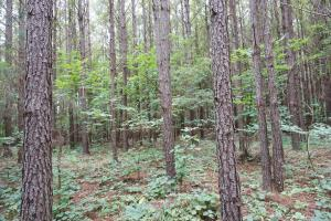 The Boligee Tombigbee River Timber & Hunting Investment in Greene, AL (2 of 49)