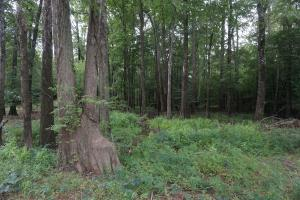 The Boligee Tombigbee River Timber & Hunting Investment in Greene, AL (32 of 49)