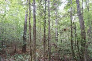 The Boligee Tombigbee River Timber & Hunting Investment in Greene, AL (12 of 49)