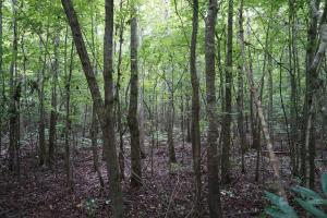 The Boligee Tombigbee River Timber & Hunting Investment in Greene, AL (24 of 49)